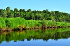 Река с крутым травянистым банком, лесом на заднем плане стоковая фотография rf