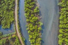 Река с тропическими лесами на своих берегах в Goa Стоковая Фотография RF