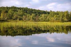 Река с тростниками и отражением Стоковая Фотография