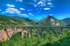 Река Тара горы и лес в Черногории Стоковое Изображение