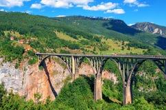 Река Тара горы и лес в Черногории Стоковое Фото