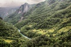 Река Тара горы и лес в Черногории стоковое фото rf