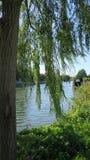 Река Темза через плача вербу стоковое фото