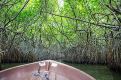 Река, тропические мангровы Цейлон, взгляд от шлюпки стоковая фотография rf