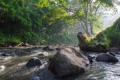 Река утра в Бали стоковое фото rf