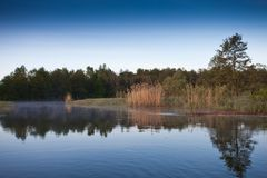 река утра рыболовства рассвета река, банки перерастанные с лесом Стоковое фото RF