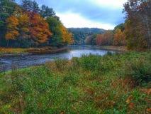 Река фанфаров на лесе кашевара Стоковое Изображение RF