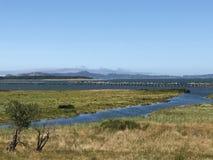 Река через болото Стоковое Изображение