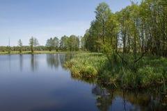 Река черепашки, Польша Стоковое Изображение RF