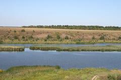 река черепашки южное Стоковая Фотография RF
