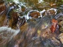 Река чистой воды видеоматериал