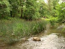 Река шальное Kamchia около деревни Болгарии Стоковое Фото