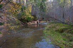Река Amata на осени, деревьях, воде, скалах Природа и река, стоковые изображения