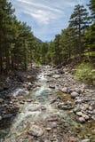 Река Asco в Корсике с соснами и снеге покрыло гору Стоковая Фотография