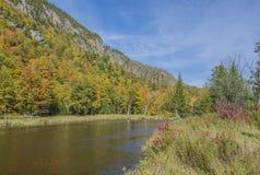 Река Ausable & скала мха с цветами стоковое фото rf