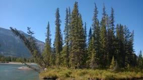 Река banff долины смычка Стоковые Изображения RF
