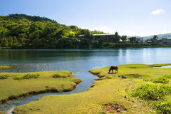 река bato Стоковое Изображение RF