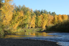 Река Chatanika в падении Стоковые Фото