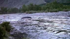 Река Chulyshman горы, Altai, Россия сток-видео