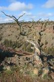 река deschutes каньона Стоковые Изображения
