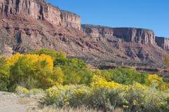 река dolores каньона Стоковые Изображения