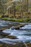 Река Elkmont, большие закоптелые горы стоковые фото