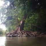 Река Guadalupe Стоковые Изображения RF
