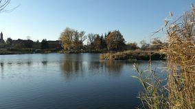 Река Havel во время времени осени Ландшафт Havelland в Германии Дерево и тростник вербы на береге видеоматериал
