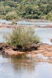 река iguassu Аргентины Бразилии Стоковые Изображения RF