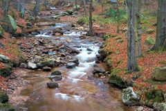 Река Ilse в национальном парке Harz Стоковое фото RF