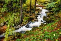 Река Ilse на Harz стоковые фото