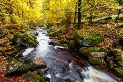 Река Ilse на Harz стоковые изображения