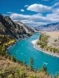 Река Katun бирюзы Стоковые Фотографии RF