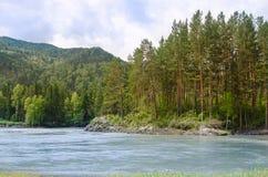 Река Katun в горах Altai, красивый лес Стоковые Фото