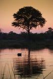 река khawi Ботсваны Стоковое Изображение