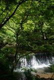 Река Kibune свежей зелени, Киото, Японии Стоковые Фотографии RF