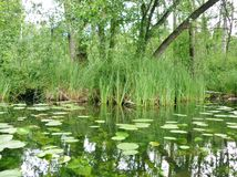 Река 4 Krutynia Стоковые Изображения RF