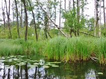 Река 5 Krutynia Стоковые Фотографии RF