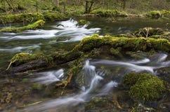Река Lathkill с мшистыми валунами и ветвями Стоковые Изображения