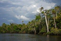 река loxahatchee стоковая фотография rf