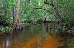 река loxahatchee Стоковые Изображения RF