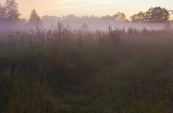 Река Luga, зона Новгорода, Россия Стоковое фото RF