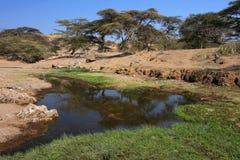 река masai ландшафта земли Стоковое фото RF