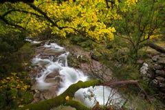 Река Mata da Albergaria в Geres Стоковые Изображения RF