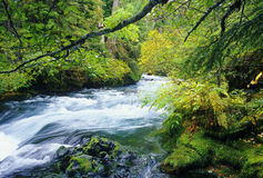 река mckenzie Стоковое Изображение