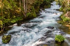 Река Mckenzie Стоковое Фото
