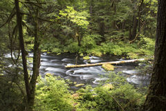 Река Mckenzie Стоковая Фотография