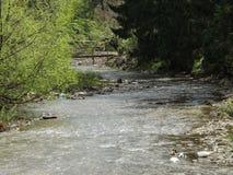Река Moldovita Стоковые Фотографии RF