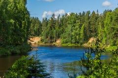 Река Mologa пропуская в древесинах стоковое фото rf