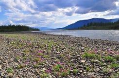Река Muksun, плато Putorana стоковое изображение rf